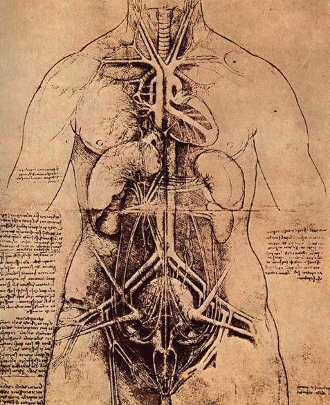 Leonardo Da Vinci: The principle organs and vascular and Urino-genitals of a woman. source: wikimedia