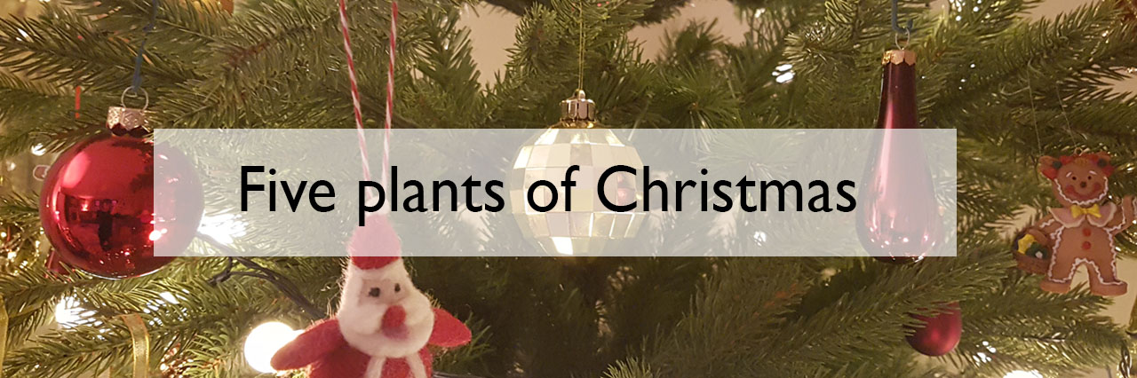 five plants of christmas a scientist called erica - Why Is Christmas Called Xmas