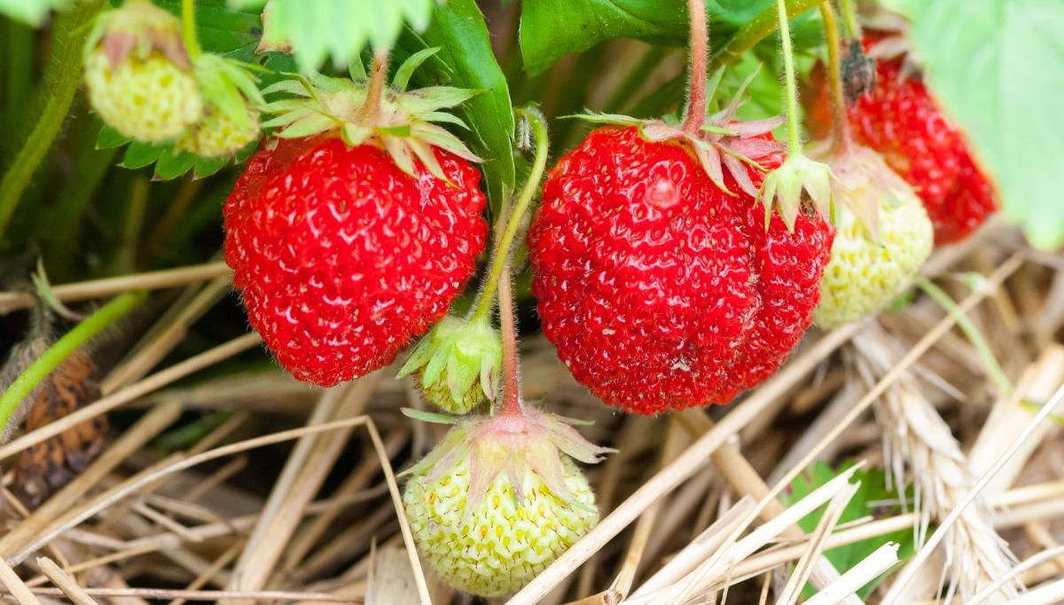 fruit-3269791_1920.jpg