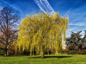 tree-2196450_1920